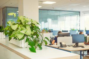 植物のあるオフィス